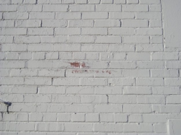 blanco-muro-de-ladrillo_21353688